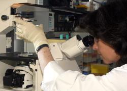 Células-tronco serão tema de Conferência internacional no Vaticano