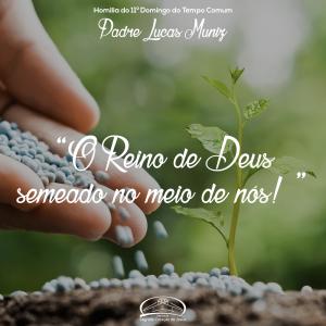 O Reino de Deus semeado no meio de nós!- Homilia do 11º domingo do tempo comum- Pe Lucas